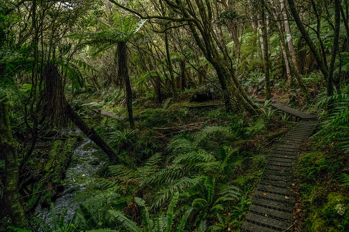 Fern Gully, Rakiura National Park, New Zealand