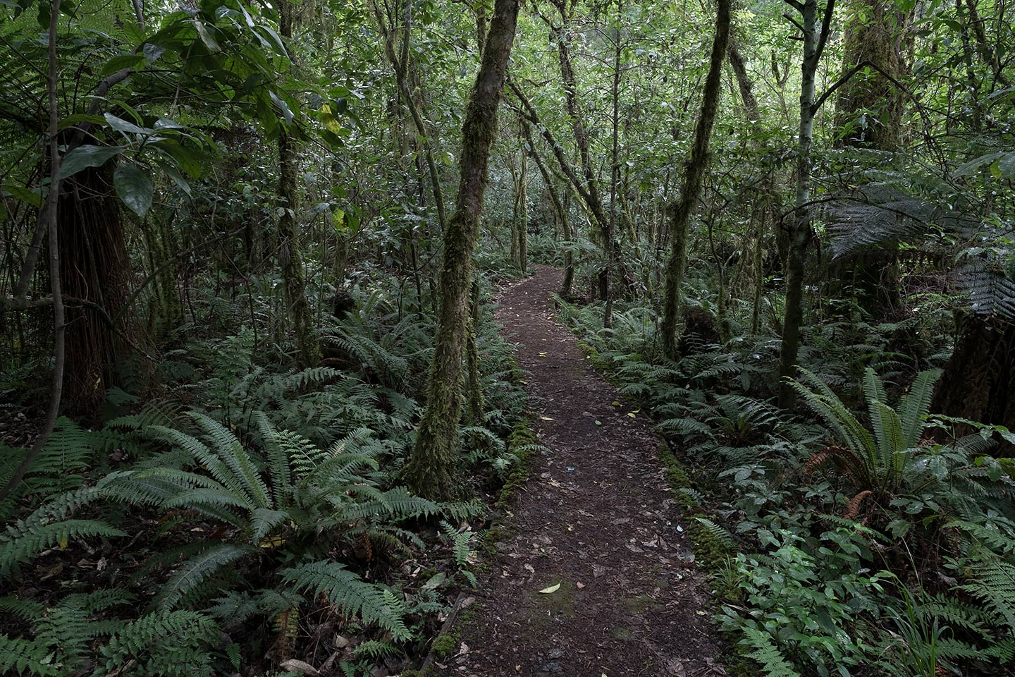 Rimu Walk, Tongariro National Park, New Zealand