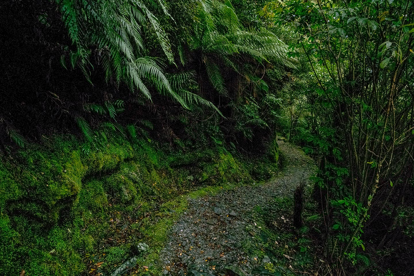 Canavans Knob, Westland Tai Poutini National Park, New Zealand